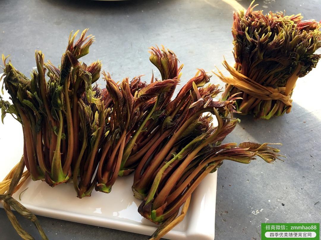 四季优美随便果讯:春季吃香椿养生功效好 教你3种健康吃法